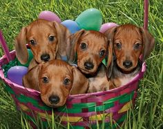 Easter basket of wiener dogs!  socalmommie