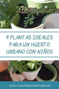 Plantar, Garden Crafts, Ideas Para, Homeschooling, Cable, Diy, Gardens, The World, Growing Succulents