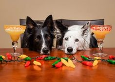 <p>Envy and Zain are really begging for their Pawgaritas (Kelly_Bove on Instagram) - Wayfair Pet Squad</p>