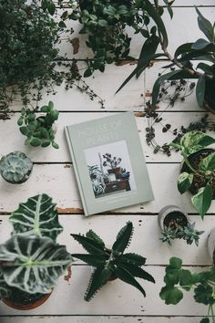 House of Plants is a practical and beautiful book on how to love and care for your succulents, cacti, tropical and air plants. You may have noticed we have a slight thing for plants, and a little bit of a collection of our own, so this book is after our own heart, and did we mention it also has a cat or two in it?