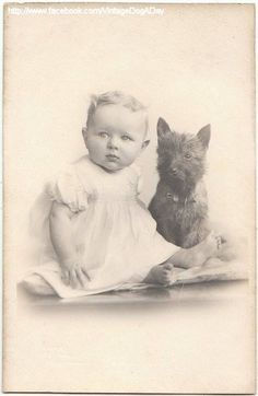 vintage cairn terrier photography
