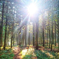 Herbstwald. 🍁🍂☀ #lebeninadliswil #adliswil #stadtadliswil #wald #forest #nature #natur #sonne #sun #zurich #outdoor #nature_perfection Vineyard, Country Roads, Outdoor, Instagram, Nature, Sun, Woodland Forest, Angel, Life