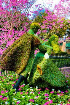 Disney World - Prince Phillip And Aurora Topiaries.