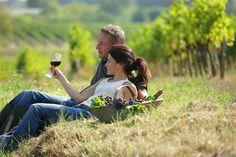 romantisches Picknick in den Weinbergen