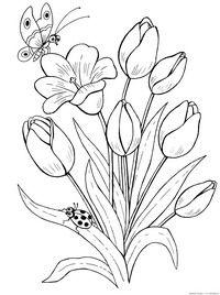 Тюльпан - скачать и распечатать раскраску. Раскраска Раскраска тюльпан, бабочка, божья коровка