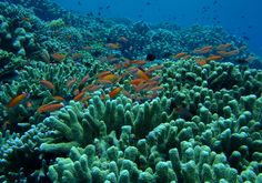 we offer snorkeling program for none diver guest.  1 trip snorkeling for USD 25 include Mask, Snorkel, Wetsuit and Fin all include tax and service