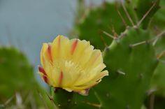 Flor em Saquarema - Projeto Eu Revivo a História   Crédito: www.casa3studio.com.br