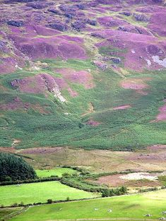 Purple Hills, Carlingford, Ireland