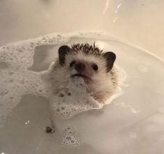 Things that make you go AWW! Like puppies, bunnies, babies, and so on. A place for really cute pictures and videos! Cute Creatures, Beautiful Creatures, Animals Beautiful, Cute Little Animals, Cute Funny Animals, Animal Pictures, Cute Pictures, Cute Hedgehog, Hedgehog Bath