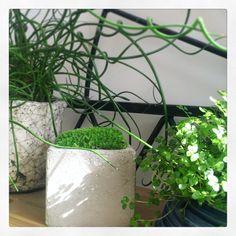 Design végétal, plantes stabilisées.Création et réalisation Adventive. Interior plant Designer. #béton #mousse #moss #designvegetal
