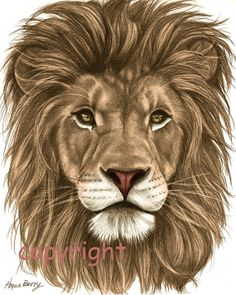 Lion Pencil Drawing Colored 8x10 Fine Art Print by TheBerryPress, $15.00 @Amy Thomson, don't you love this? :)