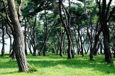 소나무에 대한 이미지 검색결과