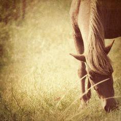 beauty #horse
