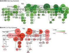 DNA copy number evolution in Drosophila cell lines   Genome Biology   Full Text
