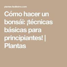 Cómo hacer un bonsái: ¡técnicas básicas para principiantes! | Plantas