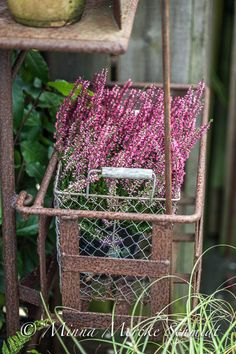 Blomsterverkstad: Höstinspiration i kruka