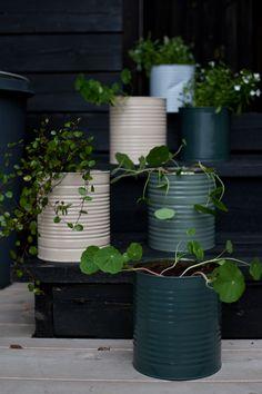 Indoor Garden, Indoor Plants, Outdoor Gardens, Vasos Vintage, Ideias Diy, Deco Floral, Plant Decor, Garden Projects, Garden Ideas