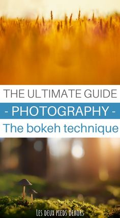 Are you wondering how to create a beautiful background blur? Here's everything you need to know about bokeh, how to create it? What are the main settings that influence it? In short, how to create a nice bokeh in photography ? Photography Beach, Double Exposure Photography, Levitation Photography, Photography Basics, Photography Courses, Photography For Beginners, Abstract Photography, Macro Photography, Photographie Bokeh