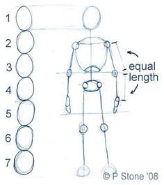 drawing body proportions for a standard character