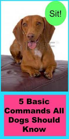 Dogs on Pinterest