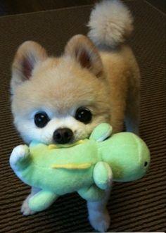 so darn cute!!! i want this dog!!!