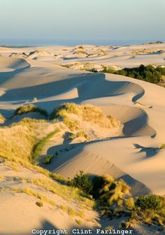 Oregon Dunes, Siuslaw Natl Forest