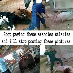 The only reason we need animal rights is to correct human wrongs. Vegan Animals, Farm Animals, Why Vegan, Vegan Vegetarian, Factory Farming, Stop Animal Cruelty, Animal Welfare, Animal Rights, Going Vegan