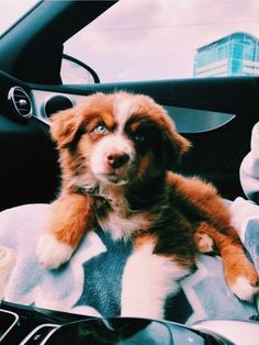 See more of onlyvscothings's content on VSCO. Super Cute Puppies, Cute Little Puppies, Super Cute Animals, Cute Dogs And Puppies, Cute Little Animals, Baby Dogs, Cute Funny Animals, Doggies, Baby Animals Pictures