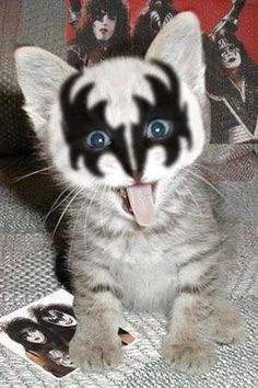 Can't help but love this photo!! KISS ROCKS!!