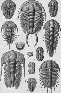 Plate-III-Cambrian-Crustacea.jpg (500×761)