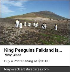 King penguins. Taken on the Falkland Islands