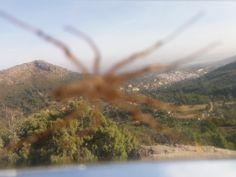 Tela de araña... (2)