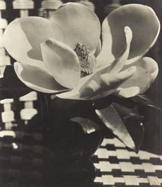 Man Ray, Magnolia, 1926.