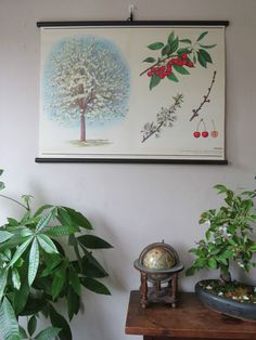 VINTAGE BOTANICAL SCHOOL PULL DOWN CHART OF A CHERRY TREE PAPER ON CANVAS cz13   Antiques, Decorative Arts   eBay!