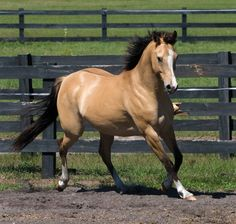 Would love this horse to be my barrel horse. Cute Horses, Horse Love, All The Pretty Horses, Beautiful Horses, Best Horse Names, American Quarter Horse, Barrel Horse, Majestic Horse, Animal Species