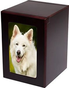 I Love My American Eskimo Car Magnet With Realistic Looking American Eskimo Photograph In The Center Covered In UV Gloss For Weather and Fading Protection Circle Shaped Magnet Measures 5.25 Inches Diameter E/&S Imports CM-85 American Eskimo car magnet
