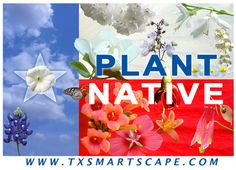 Look into native plants if you're landscaping this spring! They don't need as much water as exotics and you'll help native pollinators! :)
