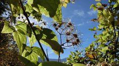 Ein prächtiges Farbenspiel hat die Natur im Herbst zu bieten