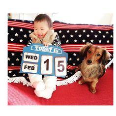 . . 今日で1歳2ヵ月👼💓 . シェリたんカメラ目線👀 このあと座ったまま寝てたよ、、😂💤 . . #1歳2ヶ月 #12月生まれ #女の子 #薄毛girl  #ミニチュアダックス #愛犬 #常に一緒 #dog #親バカ #親バカ部 #いぬばか部 #犬と子供  #ワンダフルベイビー #mamanoko #ママカメラ #インテリア雑貨 #西海岸インテリア