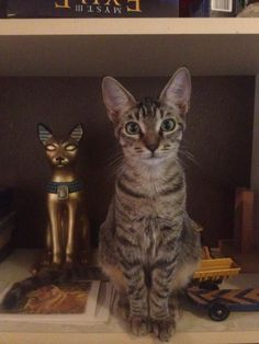 """Dis my distant ancestor, Kitteh God frum Ejipped. I looked him up on Ancester.Com"""
