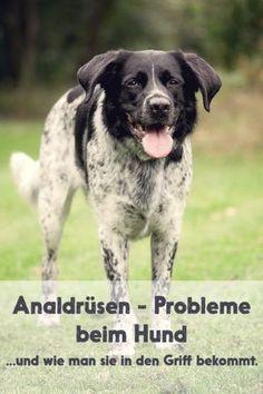 Analdrüsen Probleme beim Hund - und eine Lösung