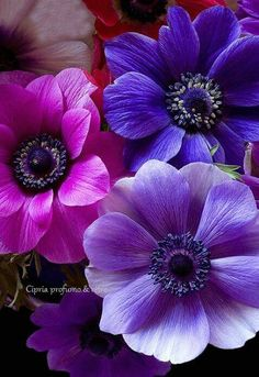 purple flowers to brighten your day