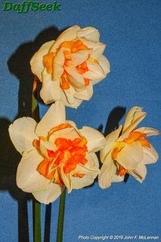 Detail Page – DaffSeek Daffodils, Detail, Painting, Art, Daffodil, Paint, Draw