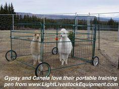 Goats On Pinterest Goat Shelter Goat Pen And Goat House