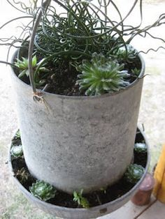 succulents in chicken waterer - Perfect idea for what to do with my old feeder and waterer! Chicken Feeder Decor, Chicken Waterer, Chicken Feeders, Flower Planters, Garden Planters, Flower Pots, Rustic Gardens, Outdoor Gardens, Metal Chicken