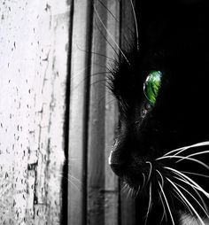 Wicked black cat