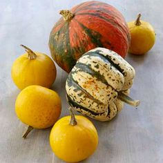 Squash Growing Guide - http://www.ecosnippets.com/gardening/squash-growing-guide/