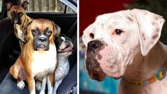 Pet rescue stories you won't be scared to read How two pups overcame their rough beginnings and found forever homes.