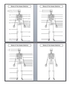 Skeletal System Diagrams: Study, Label, Color and Quiz
