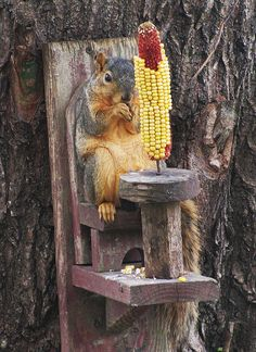 We had a squirrel feeder like this in the backyard at my parents house. Animals And Pets, Baby Animals, Funny Animals, Cute Animals, Squirrel Feeder, Cute Squirrel, Squirrels, Happy Squirrel, Funny Animal Pictures